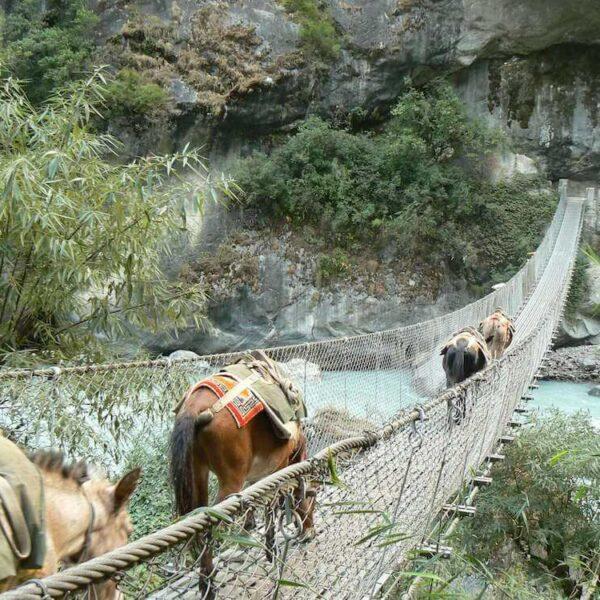 Mulis gehen über eine Hängebrücke
