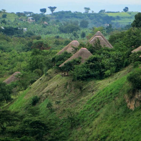 Sattgrüne Landschaft in Zentraluganda