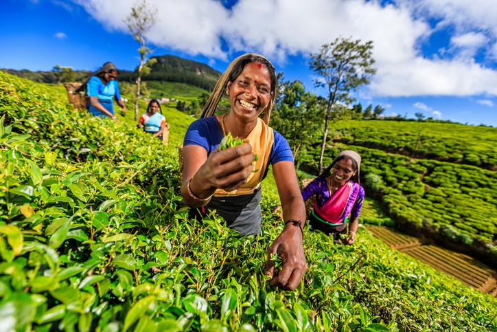 Frauen auf der Teeplantage in Sri Lanka.