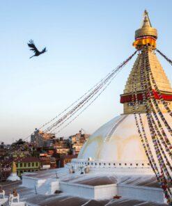 Vogel kreist an der Stupa von Bodnath in Kathmandu
