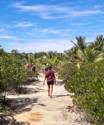 Volunteers walking in nature