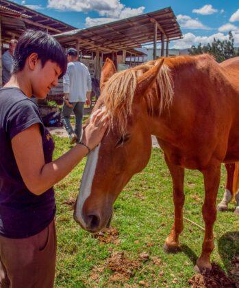 Volontär streichelt Pferd